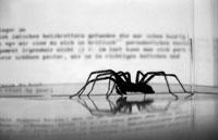 Spider, Bot, Robot, Crawler - Googlebot, Yahoo Slurp, MSNbot
